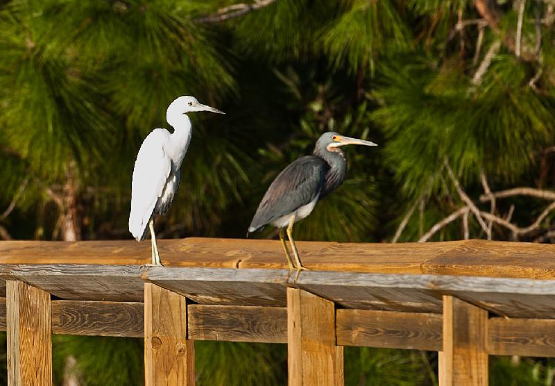 Belle Lago is home to an abundance of beautiful birds.